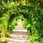 Photo de The Courts Garden