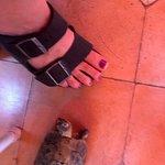 watch where you walk... resident baby tortoise