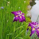 ภาพถ่ายของ Isuien Garden