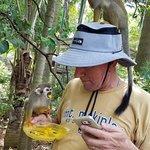 Feeding the Squirrel monkeys