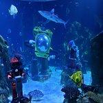 Φωτογραφία: Sea Life Aquarium