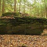 An erratic boulder along the Burbank Trail, Yokun Ridge North.