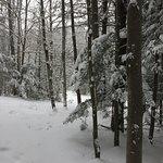 Sunnidale Park Arboretum照片