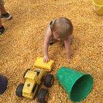 Corn Cob Acres Field of Fun Photo