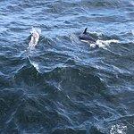 Foto van Hyannis Whale Watcher Cruises