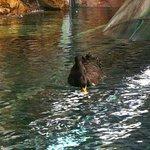 上海海洋水族館の写真