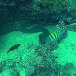Silent World Divers의 사진