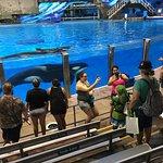 SeaWorld Orlando Photo