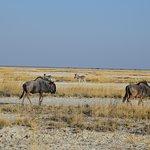 Safari en Okavango