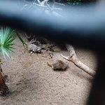 Photo of Cocodrilo Park Gran Canaria