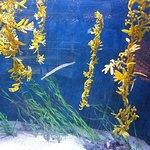 Billede af Key West Aquarium