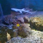 Photo de Key West Aquarium