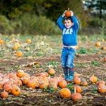 Pick your own pumpkin at the Pumpkin Patch.