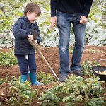 Dig your own potatoes and cook them for tea. The Potato Patch Cotswold Farm Park.