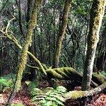 Фотография Garajonay National Park