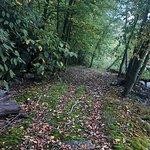 Beautiful walking paths at rear of property.