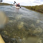 Foto de Paddles Snorkel and Kayak Eco Adventure