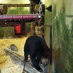 ภาพถ่ายของ Edinburgh Zoo