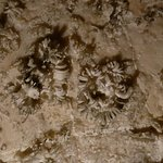 Gypsum natural flower formation