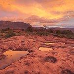 Φωτογραφία: Dreamland Safari Tours