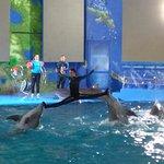 Delfinarium Nemo