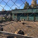 Ostrich Farm Dolina Strausov의 사진