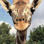 Foto de Zoo Safari