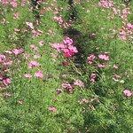 Billede af Wildseed Farms