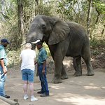 Physical interaction with elephants.