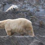 Фотография Пражский зоопарк