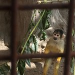 Photo de Guldborgsund Zoo & Botanisk Have