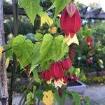 Foto van Botanical Garden Kruidtuin