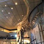 The sperm whale.
