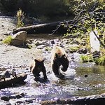 mama bear with one of her cubs