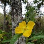 صورة فوتوغرافية لـ Highlands Hammock State Park