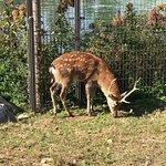 ภาพถ่ายของ Songdo Central Park