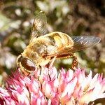Happy bees