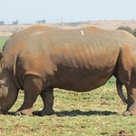 One of the rhinos at its best