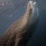 Photo of Phi Phi Diving