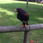 Foto de Liberty's Owl Raptor and Reptile Centre