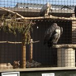 Foto de Liberty's Owl Raptor and Reptile Centre