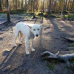 Wild Spirit Park fényképe