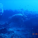 green sea turtle at Ewa Pinnacles