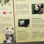Φωτογραφία: Berlin Zoological Garden