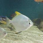 Photo of Mauritius Aquarium
