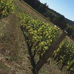 Bainbridge Vineyards照片