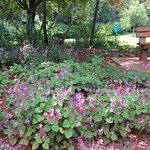 Photo of Pretoria National Botanical Garden