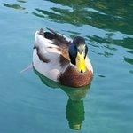Lake Bled의 사진