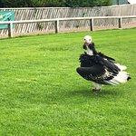 Falconry UK Thirsk Birds of Prey Centre รูปภาพ