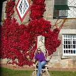 The wonderful Virginia creeper dressed for autumn at the front of A La Ronde